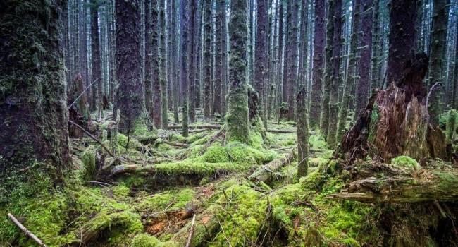 Изменили климат нашей планеты: на территории США обнаружен самый древний лес