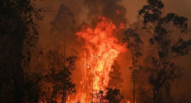 «Спасайся, кто может»: Леса Австралии терпят масштабные пожары