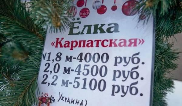 «Везем их через Россию»: в Симферополе начали торговать елками из Ивано-Франковска