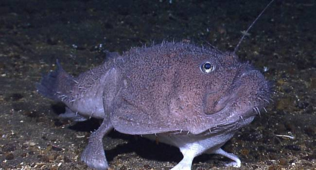 Рыба с ногами: ученые сделали сенсационное открытие