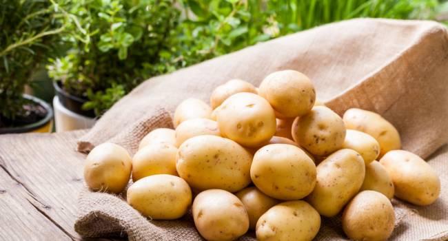 «Самая большая зависимость»: эксперт рассказал об импорте картофеля из Африки