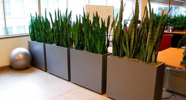 «Комнатные растения – красота жизни»: Японские ученые доказали пользу комнатных растений в рабочих кабинетах