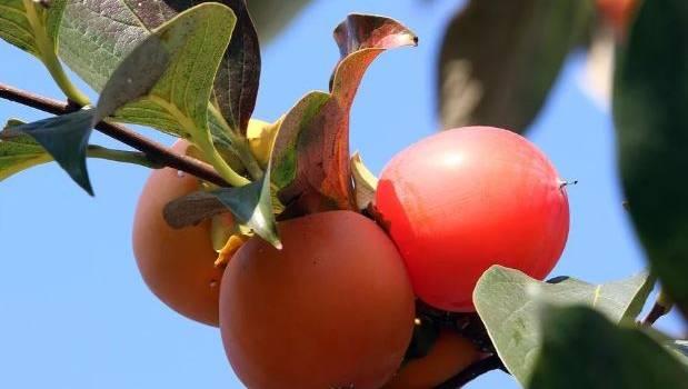 Медики рассказали о самой полезной ягоде в зимнее время