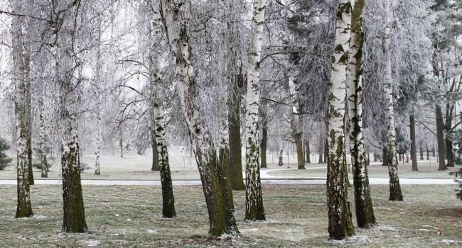 Крещенские морозы, а потом опять тепло: синоптик рассказала о погоде в ближайшие дни