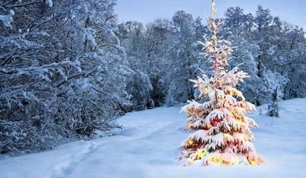 Относительное тепло и сырость: синоптики рассказали о погодных перспективах на ближайшие дни
