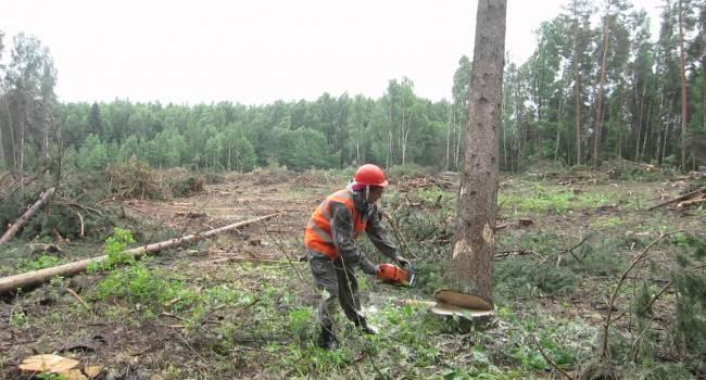«Вырвали легкие»: В Житомирской области безжалостно уничтожили лес с ущербом в 15 миллионов гривен