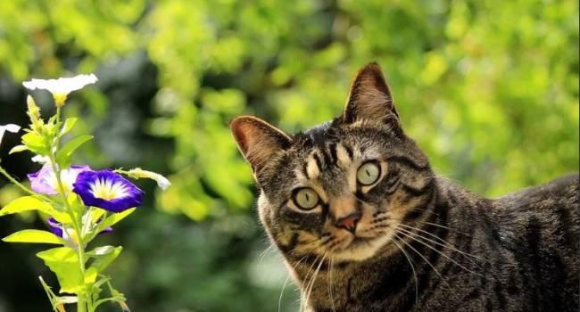 Не лишайте питомца удовольствия: эксперты назвали любимые ароматы кошек