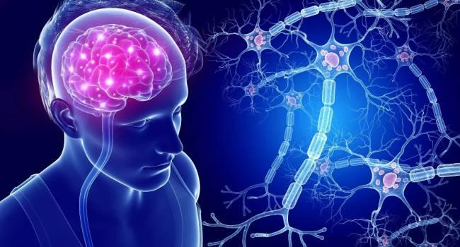 «Берегите нервы»: Ученые научились восстанавливать нервные клетки