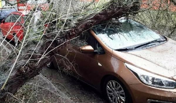Чехию накрыл мощный ураган: без света остались 15 тысяч домов