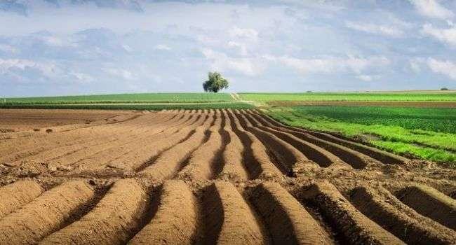 Политолог: власть не понимает сама, зачем Украине рынок земли, просто идет по этому сценарию, выполняя требование МВФ