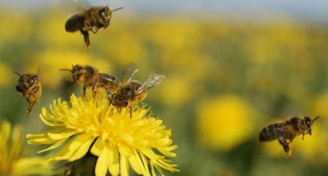 Массовое вымирание: ученые рассказали об исчезновении насекомых и о последствиях