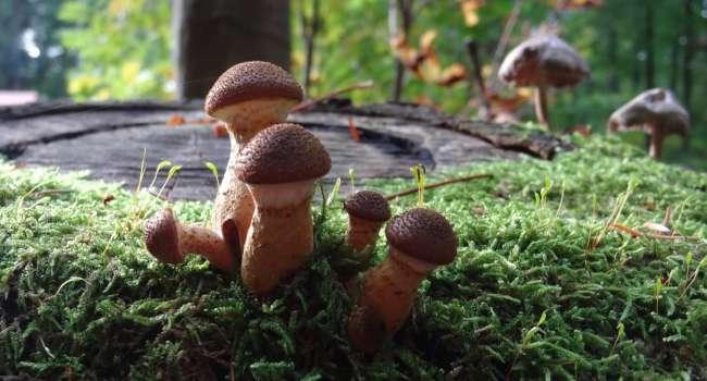 800 миллионов лет: ученые опровергли старую теорию о появлении грибов на Земле
