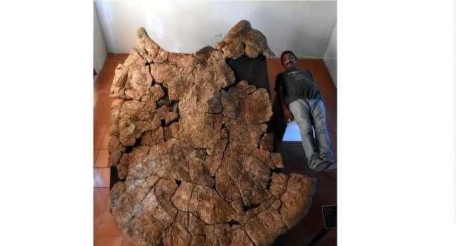 Невероятных размеров: ученые обнаружили останки древней черепахи