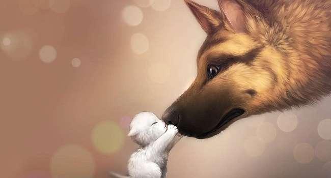 Первая помощь и дальнейшие действия при укусе животного