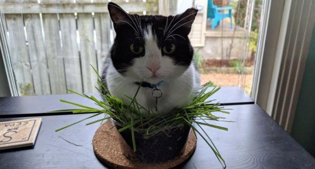 «С любовью может навредить...»: Коты и цветы в доме не всегда совместимы