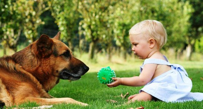 «Если рядом друг...»: Специалисты рекомендуют неуверенным в себе детям завести домашнего питомца