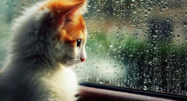 Заморозки, холод и дожди: синоптик рассказал о погоде на апрель
