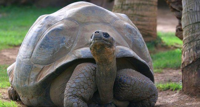 Больше двух метров: в Южной Америке обнаружены останки древней черепахи