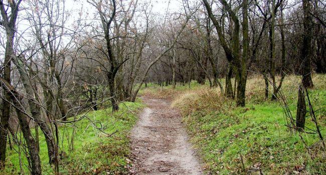 «Стоп! У нас время тишины и покоя!»: В Украине начался сезон тишины в лесах