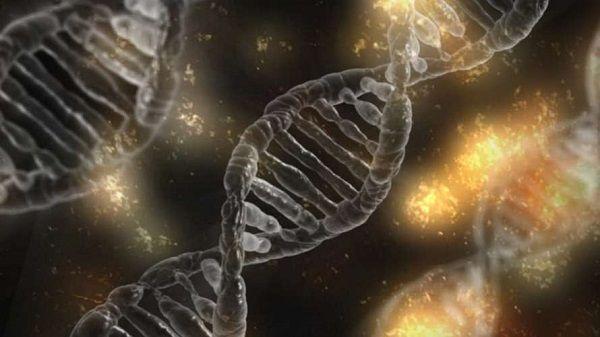 Ученые выяснили, какие гены отвечают за склонность к наследственному алкоголизму