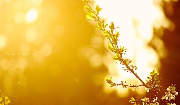 Вернется солнце и тепло: синоптики обновили прогноз погоды в Украине