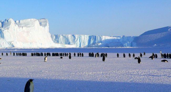 Раньше там были тропики: ученые выступили с сенсационным заявлением об Антарктиде