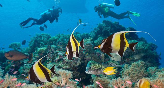 Всего за 30 лет: ученые рассказали, как можно восстановить экосистемы океанов
