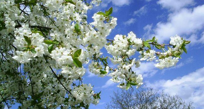 7 апреля начнется лето: синоптики порадовали прогнозом