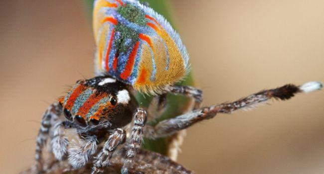 Они невероятно крошечные: ученые нашли в Австралии несколько видов уникальных пауков