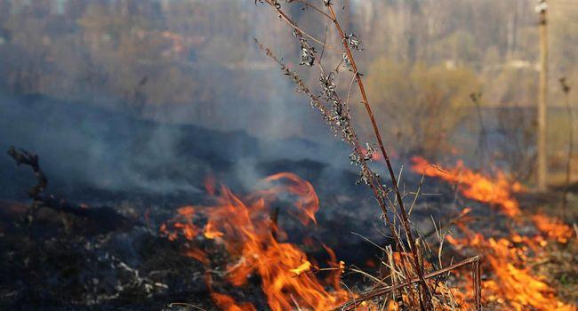 Любители тезиса «просто сжигаю сорняк» только по Киеву спровоцировали больше 20 масштабных поджогов за 1 сутки