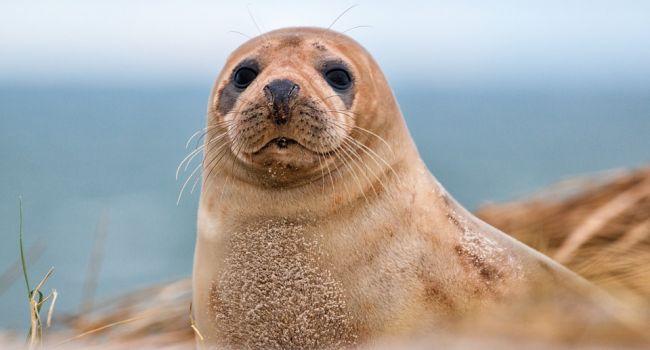 Были и другие животные: ученые сделали неожиданное заявление об обитателях Австралии