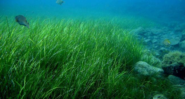 Процесс идет намного быстрее: ученые заявили о планктоне, по которому можно отследить климатические изменения
