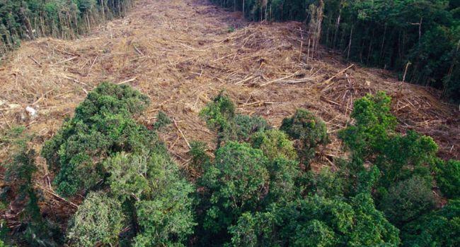 Ускорит распространение болезней: ученые сделали важное заявление о вырубке лесов