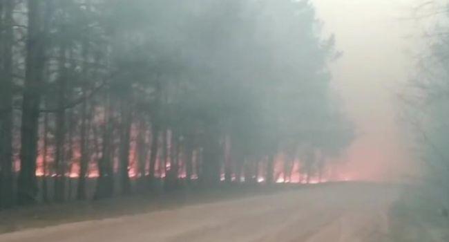 Житомирская область опять пылает огнем