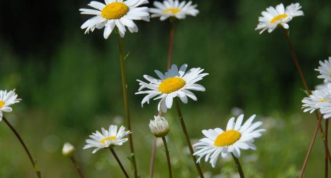 Борется со многими внутренними воспалениями: назван уникальный травяной отвар