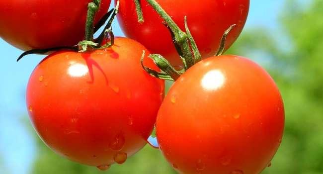 Могут быть последствия: медики назвали противопоказания к употреблению помидоров