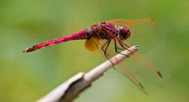 Всего за три десятилетия: ученые заявили о массовом вымирании насекомых