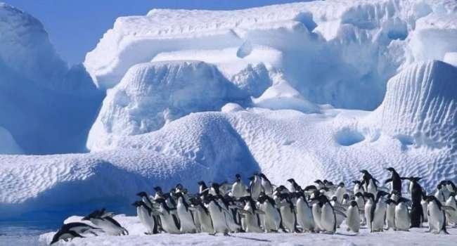 Недалеко от Антарктики: ученые обнаружили уникальный остров