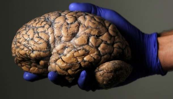 Вирусолог рассказал о серьезной опасности COVID-19 для мозга