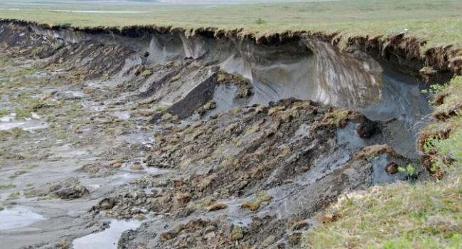 «Во всем виновато глобальное потепление»: эксперт рассказала о появлении множество опасных вирусов