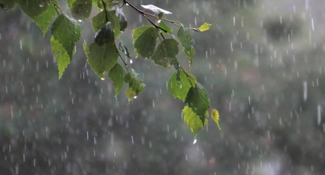 Холода и дожди продлятся недолго: синоптик рассказала о погоде в первый летний день