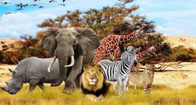 Исчезнут сотни видов позвоночных: ученые заявили о начале нового массового вымирания