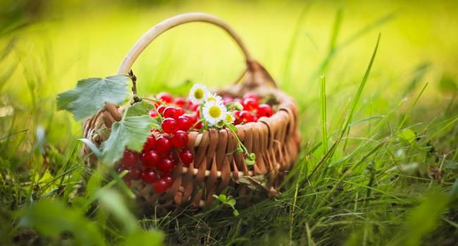 «Некоторые ягоды не нужно мыть»: агроном сделала неожиданное заявление