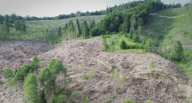 Блогер: на «100% свой глава СБУ», «200% свой прокурор», и «300% свой Арсен Борисович» не видят, кто пилит лес в Карпатах