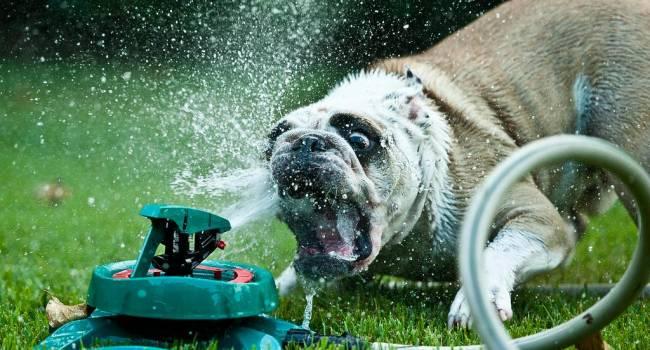 Теплообмен совсем другой: кинолог призвал владельцев собак не выгуливать питомцев в сильную жару