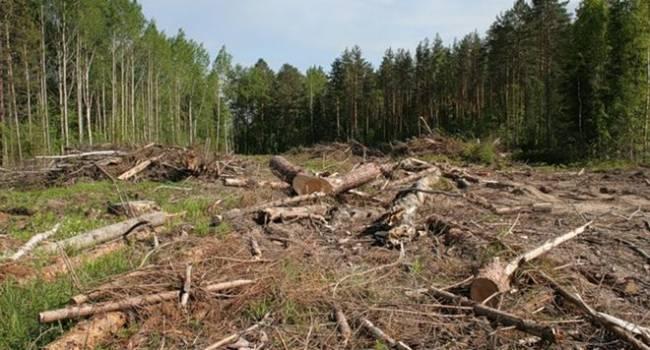 «Беспощадная вырубка лесов»: В Украине посадили больше деревьев, чем вырубили – Денис Шмыгаль