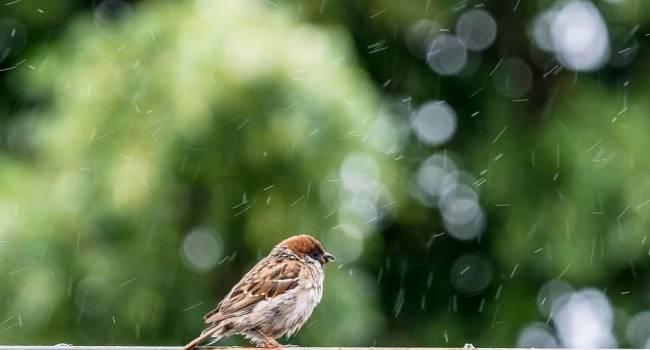 «Опасные метеорологические явления»: синоптик сообщила о сложных погодных условиях в выходные
