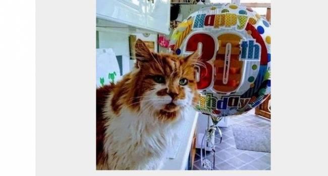 Абсолютный рекордсмен Книги Гиннесса: в Британии скончался старейший в мире кот