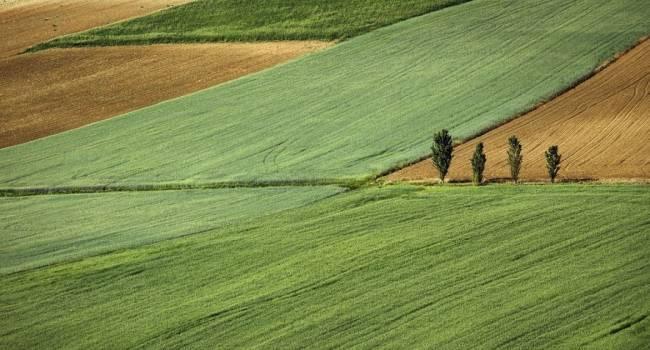 Политолог о налоге в 6 тысяч грн для фермеров: нужно вводить не минимальный налог на 1 га, а сделать полную ревизую земли