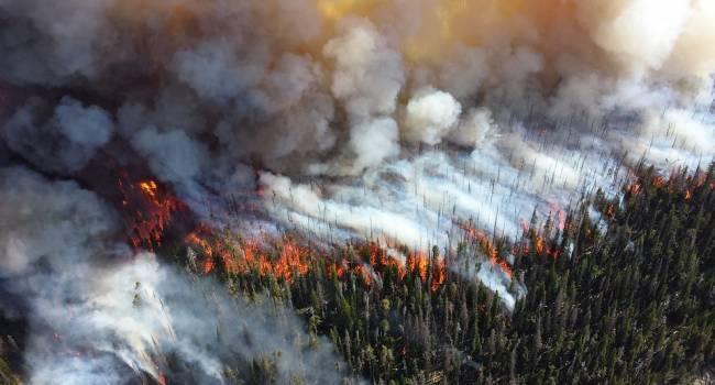 Луганская область горит огнем: Количество жертв лесного пожара уже достигло шести человек